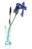 Blenden-Vase Lizenzfreie Stockfotografie