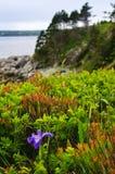 Blendenblume der blauen Markierungsfahne an der atlantischen Küste Stockfotos