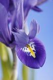 Blendenblumen Stockfotografie