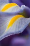 Blendenblumenblatt Stockfoto