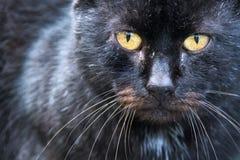 Blendend Augen einer schwarzen Katze Lizenzfreies Stockfoto