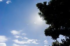 Blendenfleck durch Baum gegen blauen Himmel Stockfotos