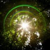 Blendenfleck und Sun Starburst durch Bäume Stockfotos