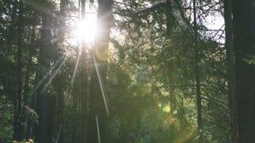 Blendenflecke des Lichtes im Wald am Frühsommermorgen - Weinlese Lizenzfreies Stockbild