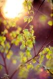 Blendenflecknaturgrün Lizenzfreies Stockbild