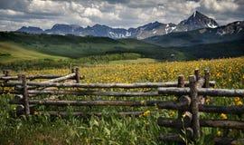 Blendung Wildflowers, Blendungs-Berge und Wiesen, Tellurid, Colorado Stockbilder