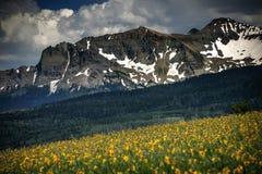 Blendung Wildflowers, Blendungs-Berge und Wiesen, Tellurid, Colorado Stockfotos