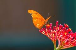 Blendungs-orange Schmetterling Stockfoto