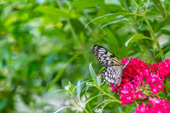 Blendungs-weißer Schmetterling Lizenzfreie Stockfotos