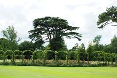Blenheim Palace rose garden in England Royalty Free Stock Images