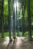 Blessed light through the forest Stock Photography