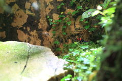 Blessed poison dart frog. On the grass Royalty Free Stock Photos