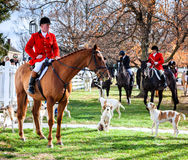 Blessing of the hounds. Shaker Village of Pleasant Hill - November 24: Traditional ceremony of blessing of the hounds and fox hunt in Shaker Village of Pleasant Stock Image
