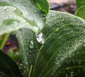 The Blessing of Water. Spring time rain much needed, beautifully flowing down the green garden plants royalty free stock photos