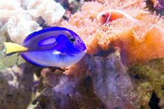 Bleu au-dessus de bleu image libre de droits