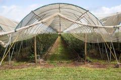 Bleu Berry Farm de tissu d'ombre Photographie stock libre de droits