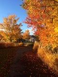 Bleu de ciel de vue d'automne de chute Image libre de droits
