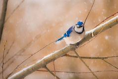 Bleu du ` s d'hiver Photo libre de droits