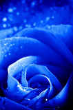 Bleu en gros plan Rose With Water Drops de Beautiul Image libre de droits