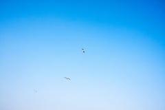 Bleu et blanc et oiseaux Photos libres de droits