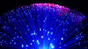 Bleu et câbles de fibre optique colorés par rose avec les astuces brillantes photographie stock