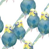 Bleu onduleux de perroquet de modèle sans couture avec une tête jaune watercolo illustration stock