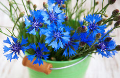 Bleuet image stock