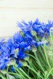 Bleuets  Photographie stock libre de droits