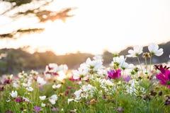 Blflowers im Garten Lizenzfreie Stockfotografie