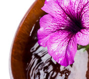 Blühen Sie Nahaufnahme und eine hölzerne Schüssel Wasser Stockfotografie