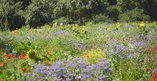 Blühende Wiese und Bäume Stockbilder