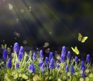 Blühende Wiesen des Kunst-Frühlinges Stockfotos