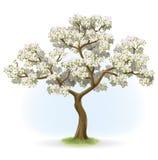 Blühender Baum Stockbilder
