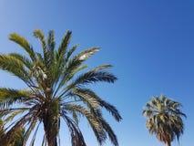 Bliźniacze palmy fotografia stock