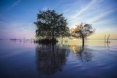 Bliźniaczy drzewo Zdjęcia Royalty Free
