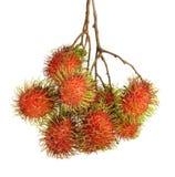 Bliźniarki owocowe z liściem na białym tle Obraz Royalty Free