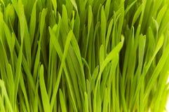 bliżej skrajnej świeżą trawę. Fotografia Royalty Free