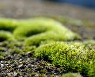 bliżej tła moss miły, Zdjęcie Stock
