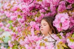 Bli av med den s?songsbetonade allergin Flicka som tycker om blom- arom Unge p? rosa bakgrund f?r blommasakura tr?d Barnet tycker arkivfoton