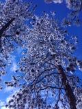 Bli frostigt i Spokane WA Arkivfoton