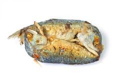 Bliźniacza makrela Fotografia Royalty Free