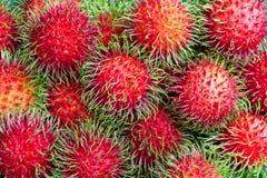 Bliźniarek owoc Zdjęcie Royalty Free
