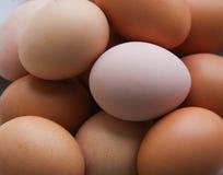 bli rädd ägg Arkivfoto
