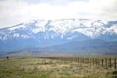 Bli skallig maximumet, den Yellowstone nationalparken, Wyoming Royaltyfri Foto