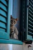 Blick der Katze Stockbild