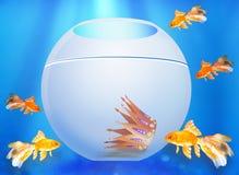 Blick för fem guldfiskar i ett akvarium stock illustrationer