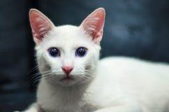 Blick för katt` s royaltyfria bilder