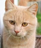 Blick för katt` s Royaltyfri Bild