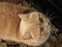 Blick för katt` s Royaltyfri Fotografi