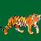 blick för tiger` s royaltyfri illustrationer